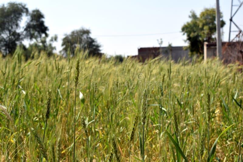 Azienda agricola del grano fotografia stock
