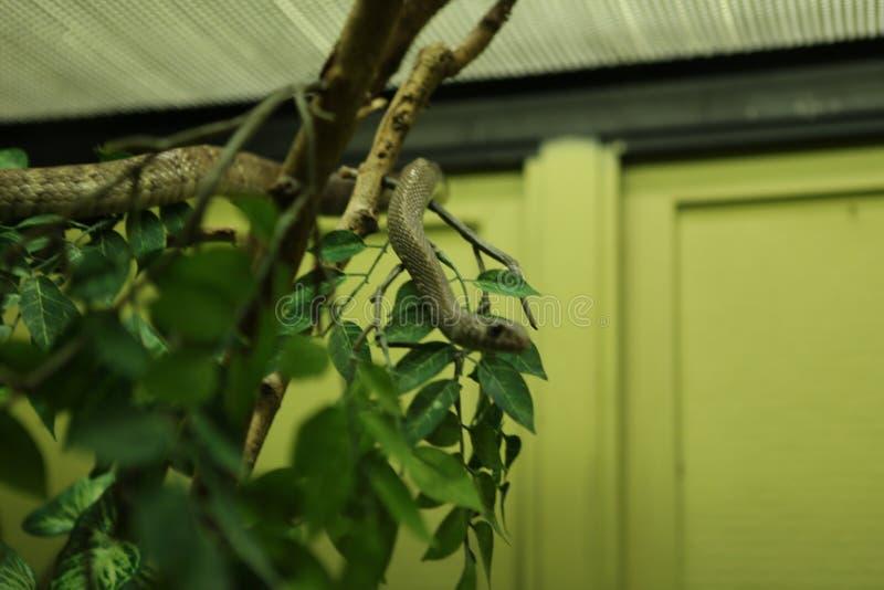Azienda agricola del serpente fotografia stock libera da diritti
