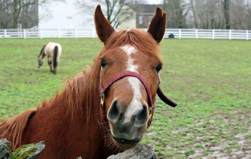 Azienda agricola del sud del cavallo immagini stock libere da diritti