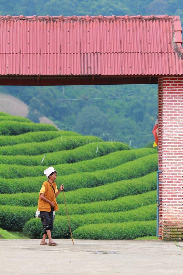 Azienda agricola del tè fotografie stock