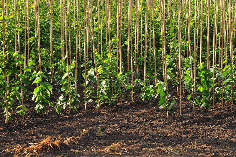 Azienda agricola del vivaio di alberi immagine stock for Vivaio alberi