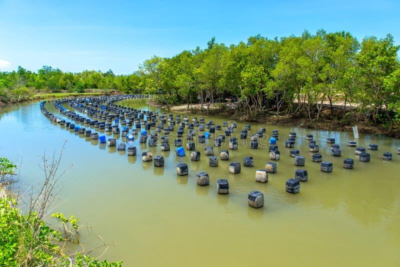 Azienda agricola dell'ostrica immagini stock