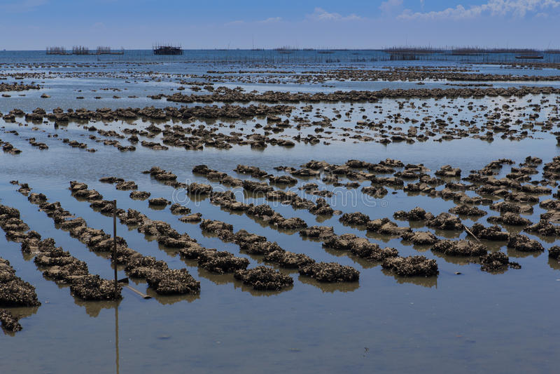 Azienda agricola dell'ostrica fotografia stock