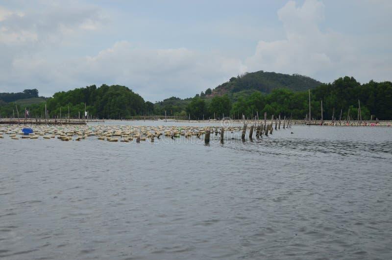 Azienda agricola dell'ostrica fotografia stock libera da diritti