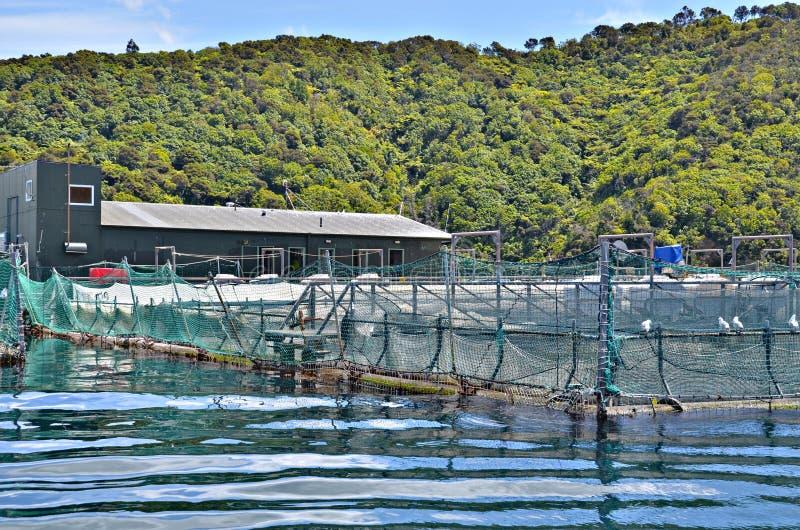 Azienda agricola dell'ostrica di Picton fotografia stock