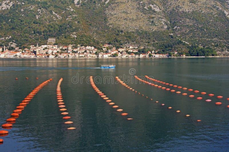 Azienda agricola della cozza della cultura del palangaro Il Montenegro, mare adriatico, baia di Cattaro fotografie stock libere da diritti