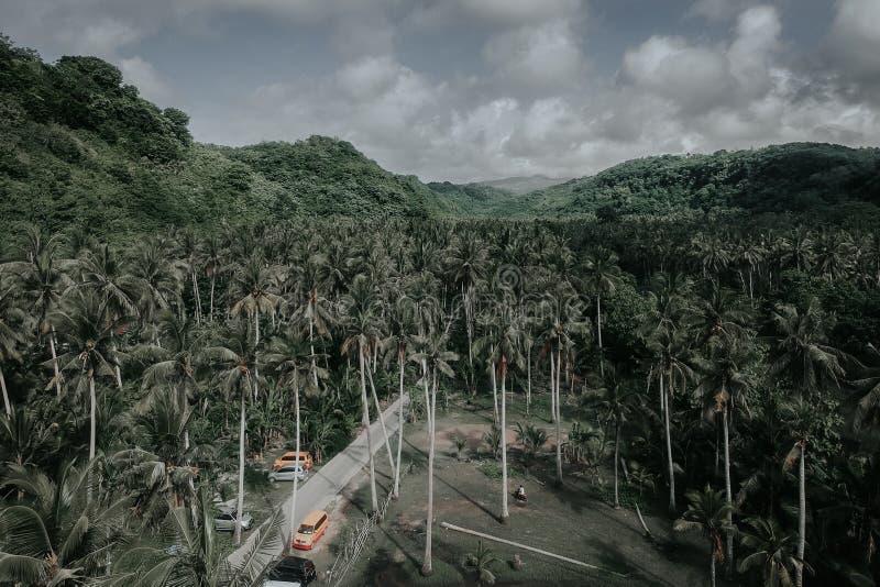 Azienda agricola della noce di cocco situata in Crystal Bay, Nusa Penida, Bali fotografia stock