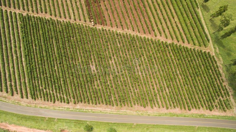 Azienda agricola della piantagione di caffè all'interno del Brasile fotografie stock libere da diritti