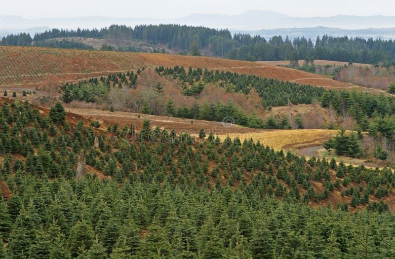 Azienda agricola di albero fotografia stock