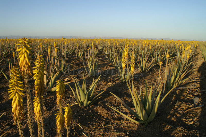 Azienda agricola di Arovera fotografia stock libera da diritti