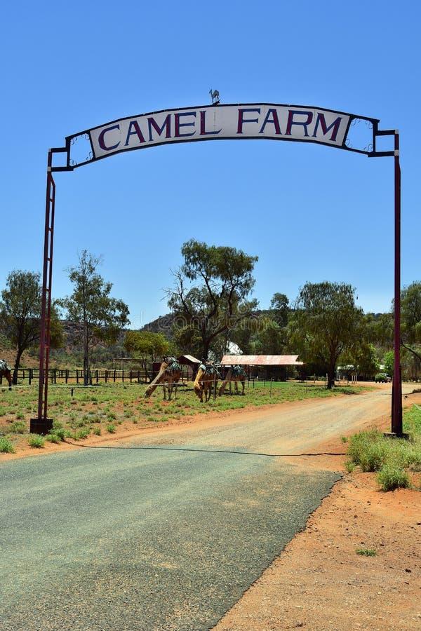 Azienda agricola di Australia_NT_Camel immagine stock libera da diritti
