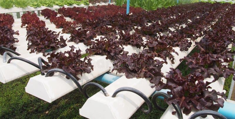 Azienda agricola di coltura idroponica fotografie stock