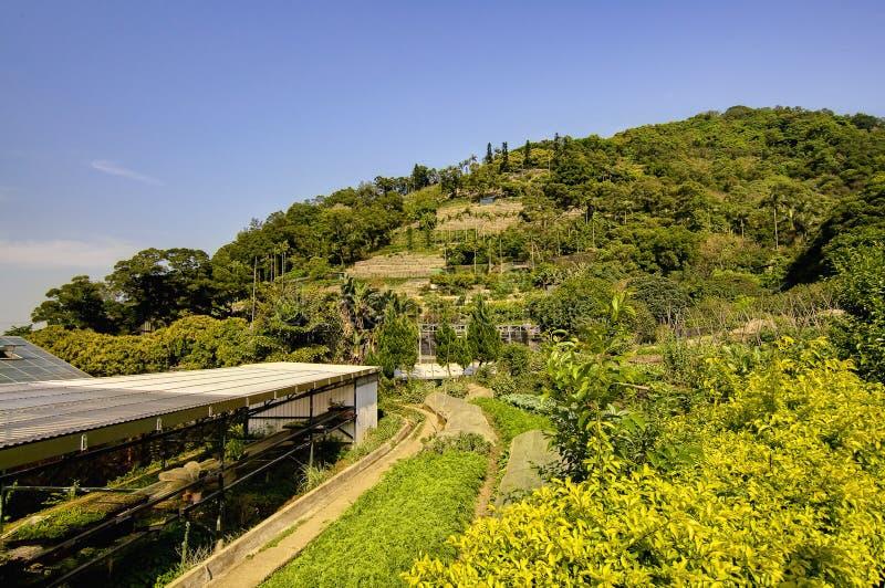 Azienda agricola di Kadoorie a Hong Kong fotografia stock