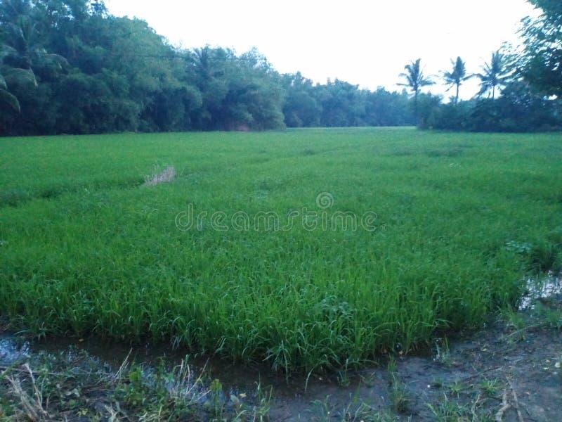 Azienda agricola dopo la tempesta immagini stock