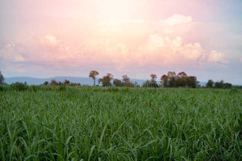 Azienda agricola e montagna dello zucchero immagine stock libera da diritti