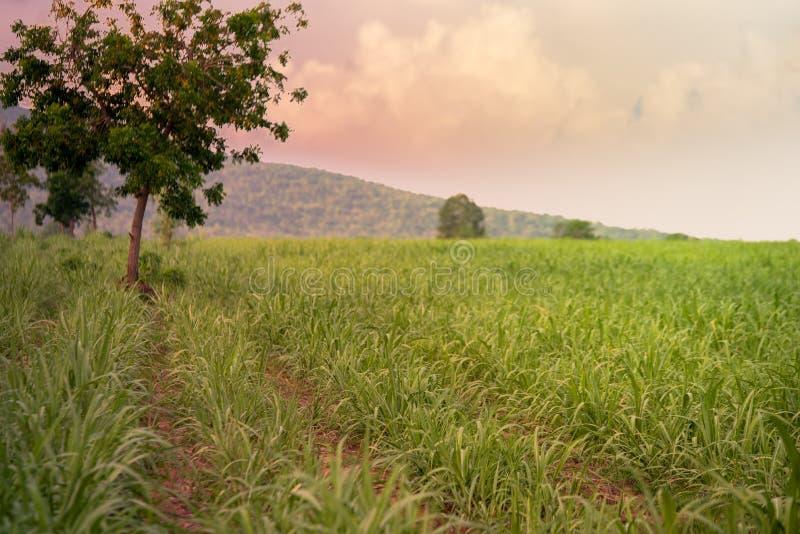 Azienda agricola e montagna dello zucchero fotografie stock libere da diritti