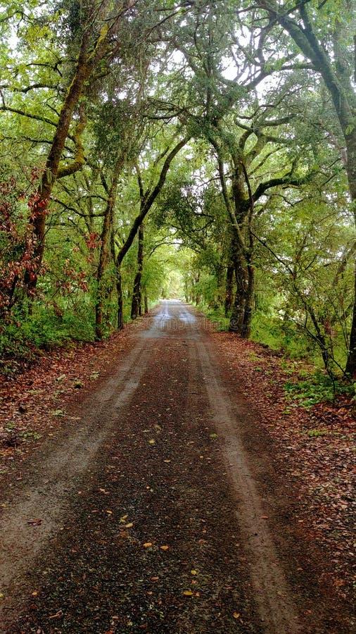 Azienda agricola familiare segreta di Napa Valley del tunnel dell'albero fotografie stock