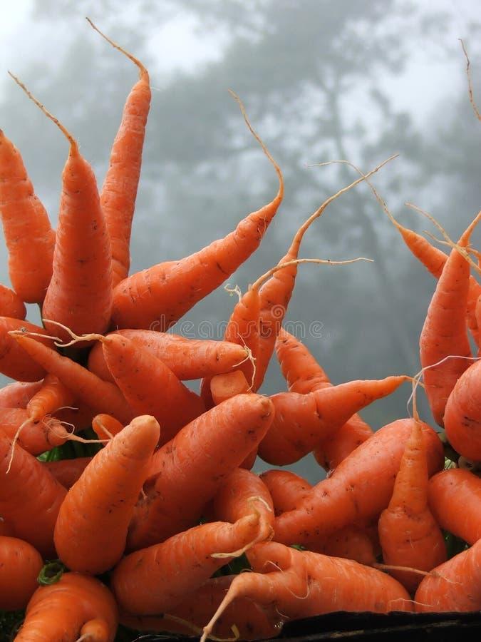 Azienda agricola fresca immagine stock