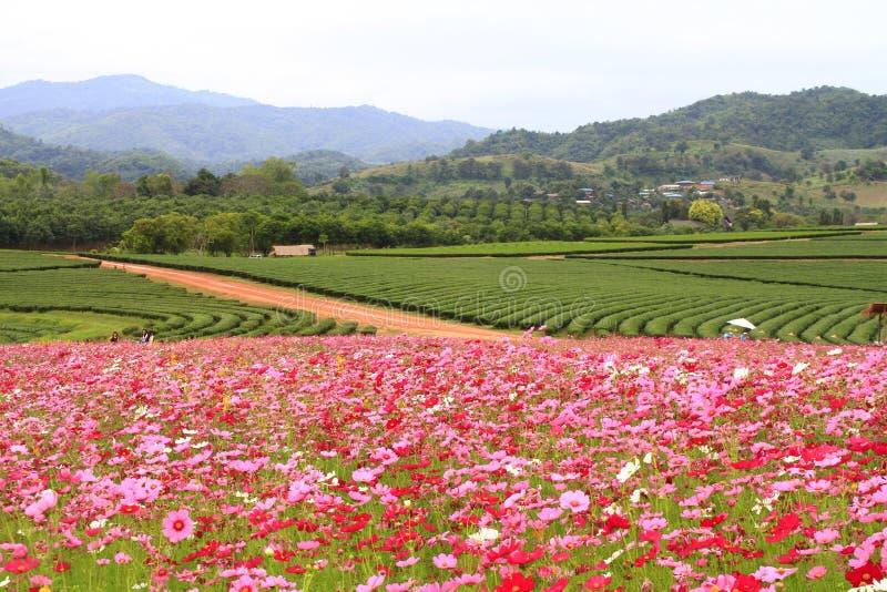 Azienda agricola nordica della Tailandia Boonrod fotografia stock libera da diritti