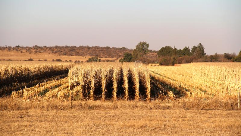 Azienda agricola a Potchefstroom, Sudafrica immagine stock
