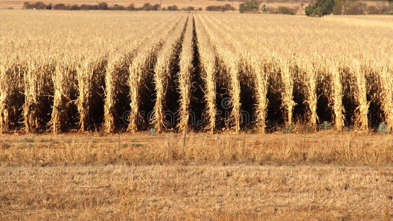 Azienda agricola a Potchefstroom, Sudafrica immagini stock