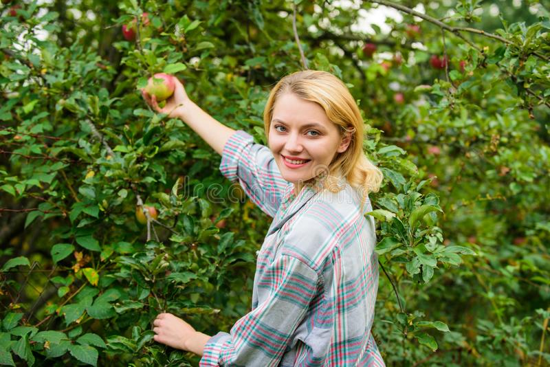 Azienda agricola producendo il prodotto naturale amichevole di eco organico La ragazza riunisce il giorno di autunno del giardino immagine stock