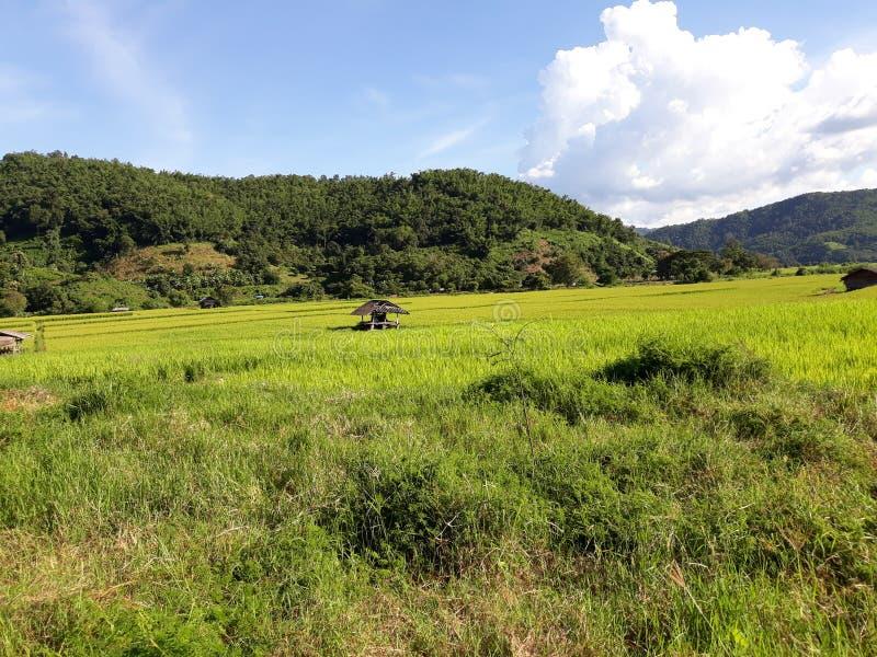 Azienda agricola tailandese fotografie stock libere da diritti