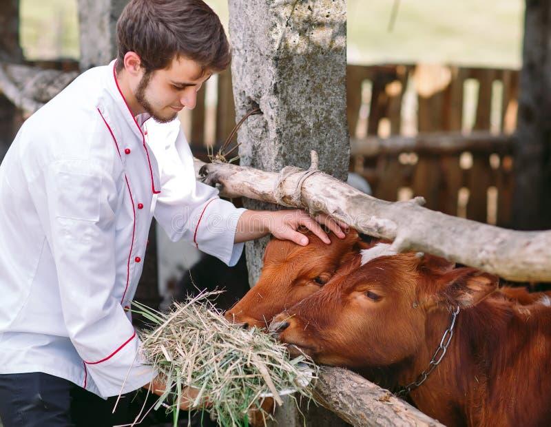 Azienda agricola agricola Un uomo alimenta le mucche con fieno fotografia stock