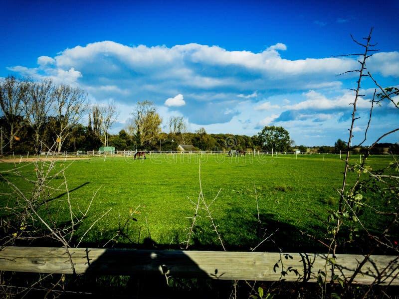 Azienda agricola variopinta tedesca con i cavalli ed il cielo blu piacevole della nuvola fotografie stock