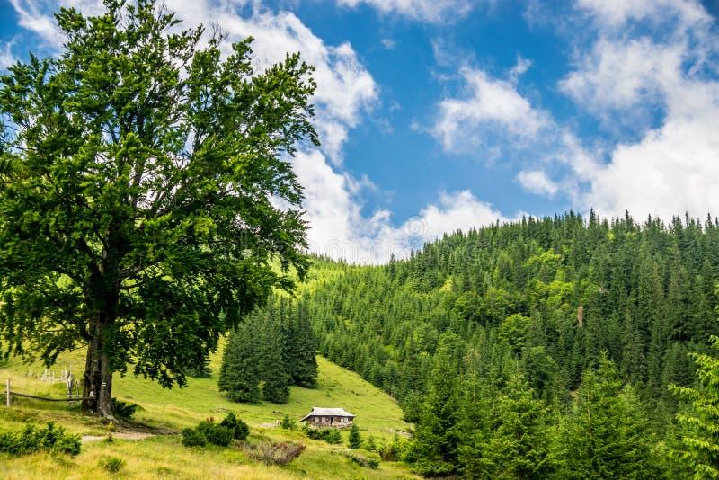 Azienda lattiera nelle montagne fotografia stock libera da diritti