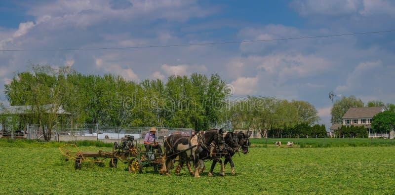 Aziende agricole Amish in Pensilvania fotografia stock libera da diritti