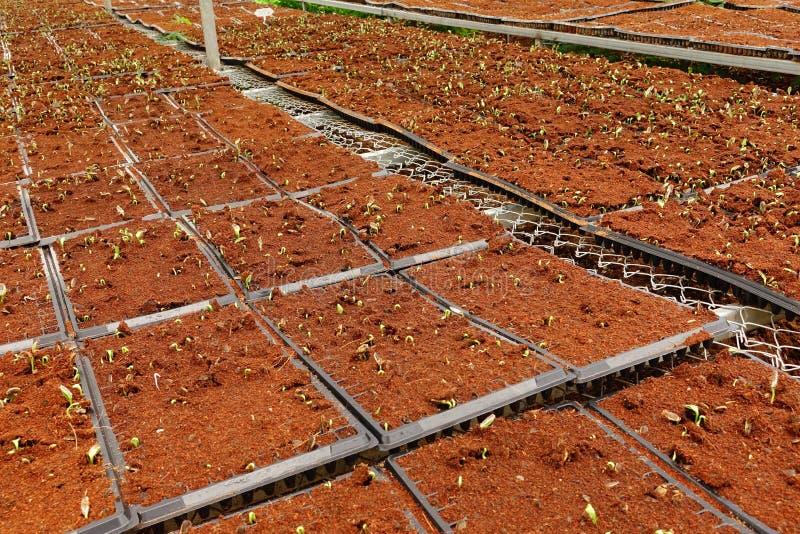 Aziende agricole di verdure organiche crescenti immagine stock