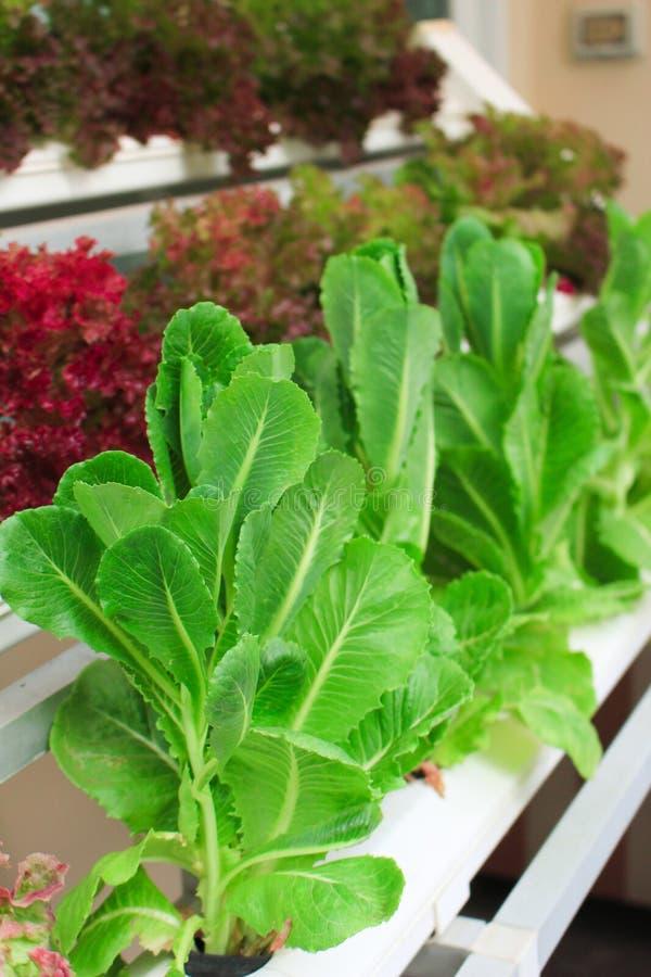 Aziende agricole di verdure organiche per background fotografia stock