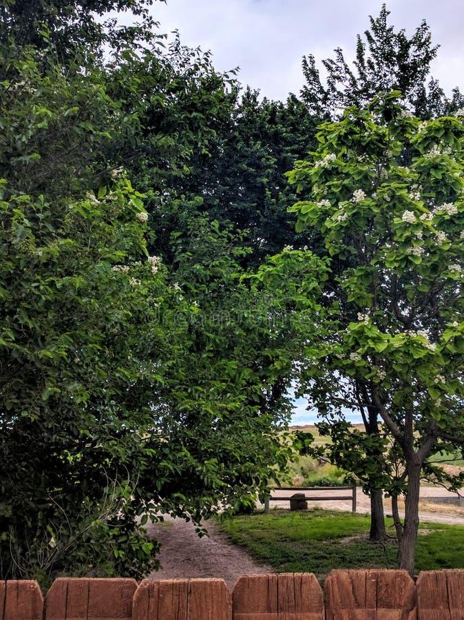 Azionamento allineato dell'albero immagini stock libere da diritti