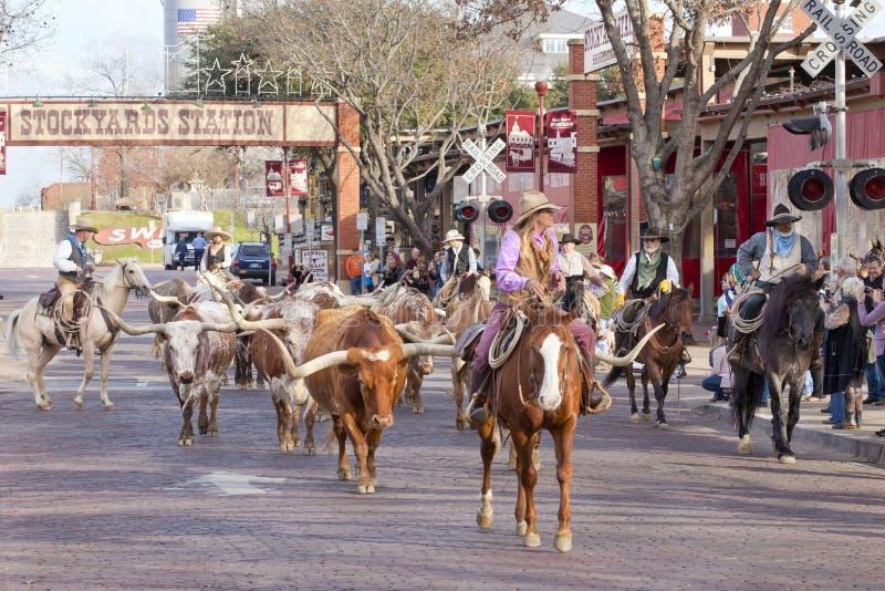 Azionamento del bestiame delle mucche texane ai recinti per il bestiame di Fort Worth fotografia stock