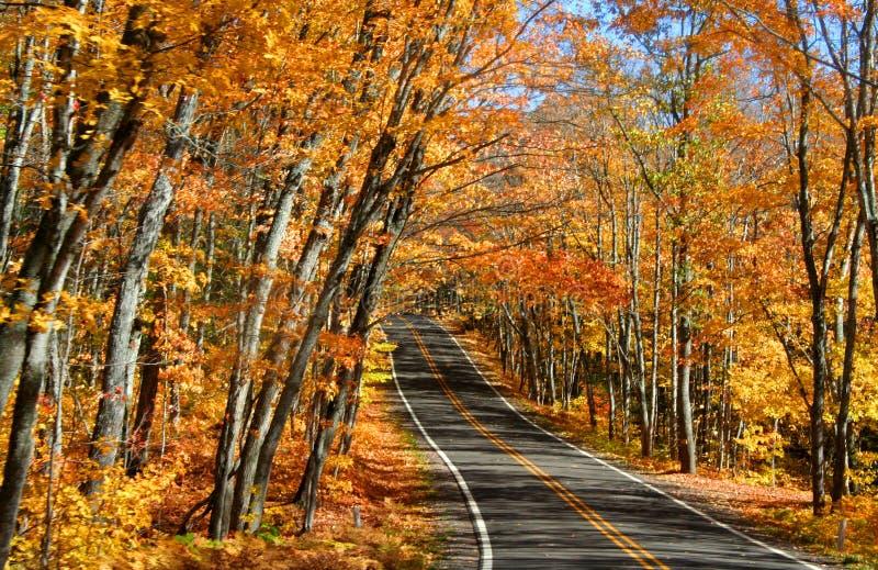 Download Azionamento di autunno immagine stock. Immagine di strada - 3131273