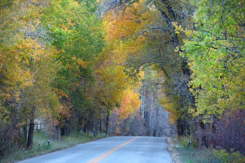 Azionamento di autunno in Colorado fotografia stock libera da diritti