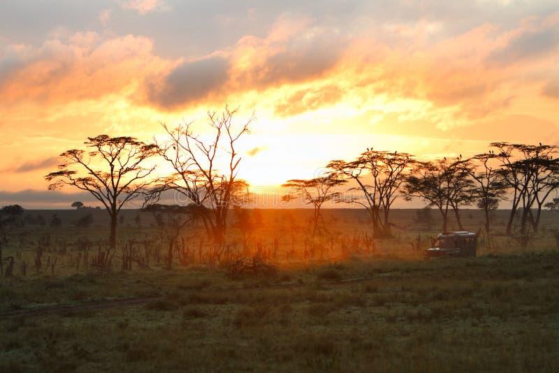 Azionamento di safari di mattina fotografia stock libera da diritti