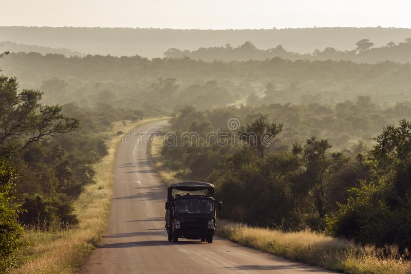 Azionamento di safari di mattina nel parco nazionale di Kruger, Sudafrica fotografia stock libera da diritti