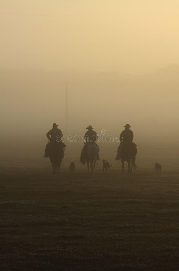 Azionamento nebbioso del bestiame di mattina immagini stock libere da diritti