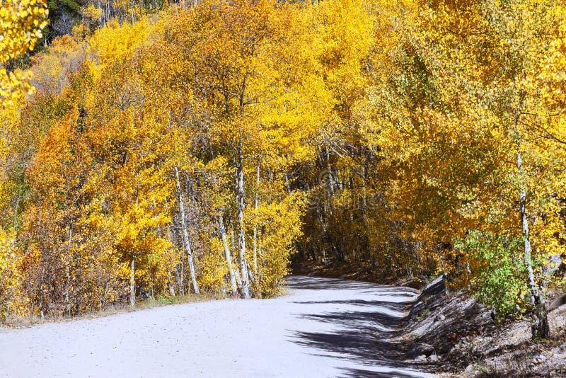 Azionamento scenico della montagna attraverso le tremule fotografie stock libere da diritti