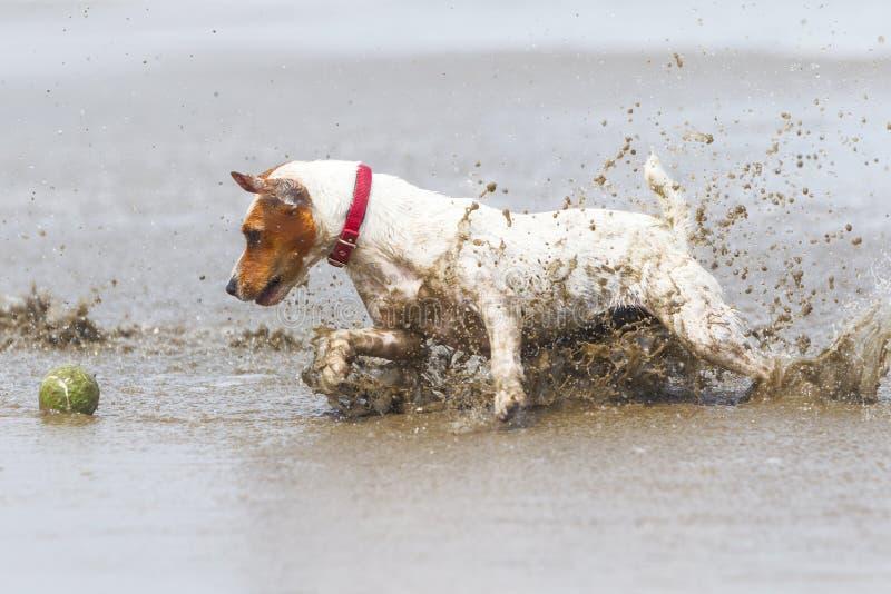 Azione di alta velocità del cane fotografia stock libera da diritti
