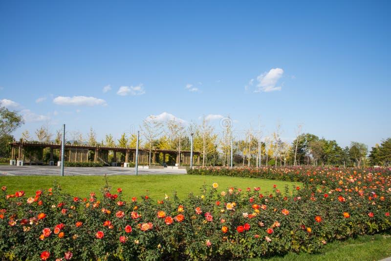 Azja Chiny, Pekin, Ogrodowy expo, chińczyk wzrastał, Drewniany pawilon zdjęcie stock