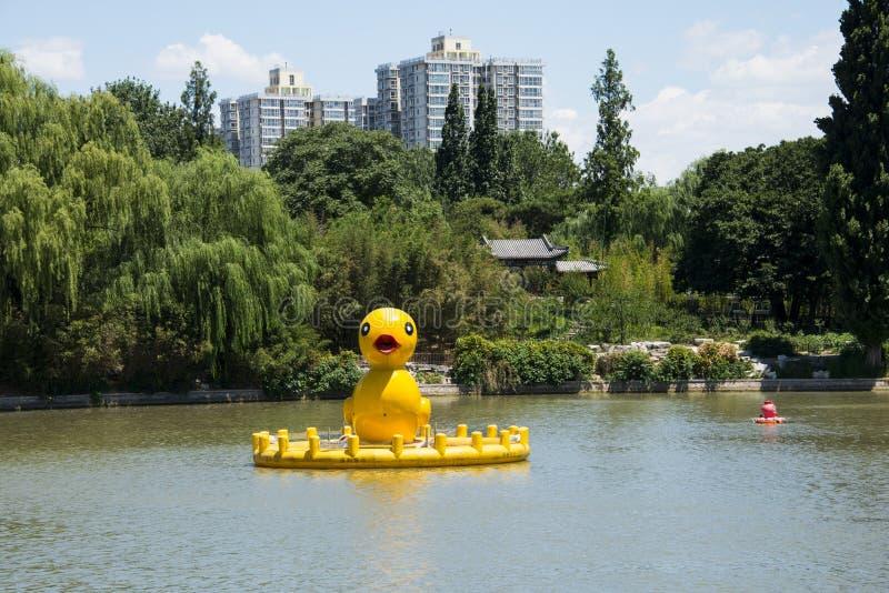 Azja Chiny, Pekin, Zizhuyuan park, Lakeviewï ¼ Œ żółta kaczka, zdjęcie royalty free