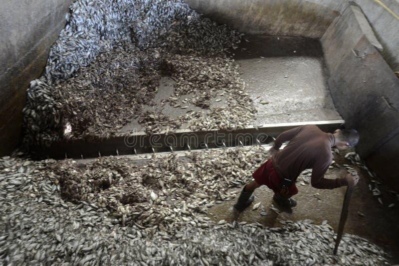 AZJA MYANMAR MYEIK FISHMEAL produkcja zdjęcia royalty free