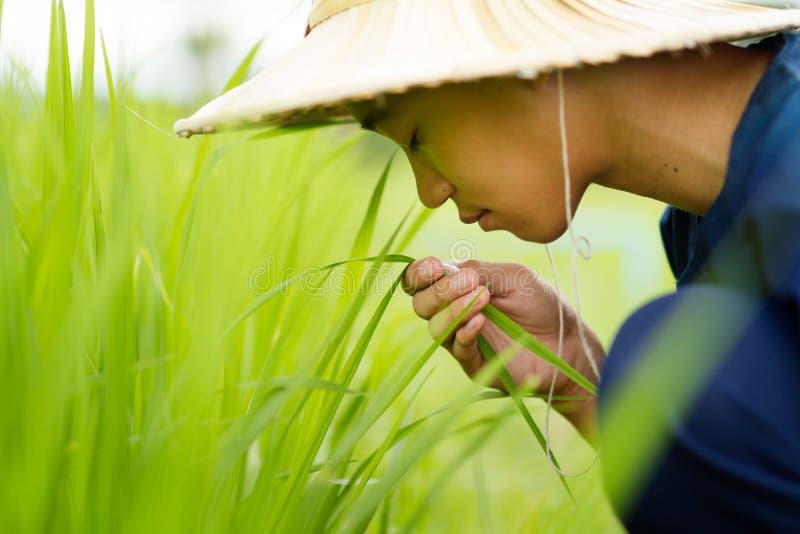 Azja rolnik i organicznie produkt przy życiorys gospodarstwem rolnym obraz stock