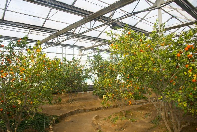 Azjata Chiny, Pekin, geotermiczny expo ogród, szklarnia obraz royalty free
