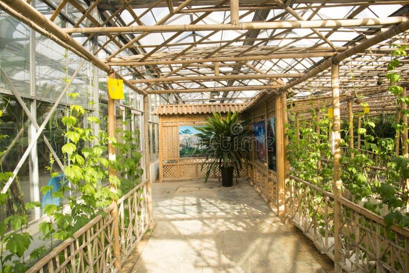 Azjata Chiny, Pekin, geotermiczny expo ogród, szklarnia fotografia stock