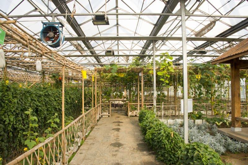 Azjata Chiny, Pekin, geotermiczny expo ogród, szklarnia zdjęcia stock