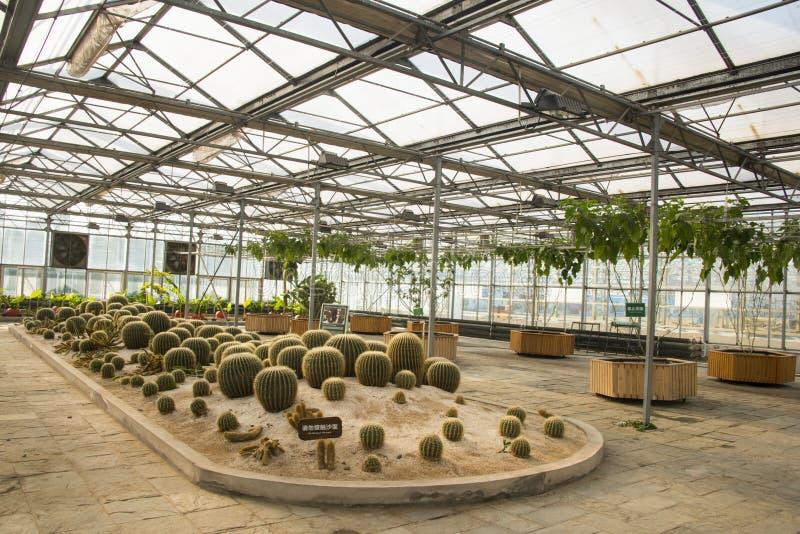 Azjata Chiny, Pekin, geotermiczny expo ogród, szklarnia zdjęcie royalty free